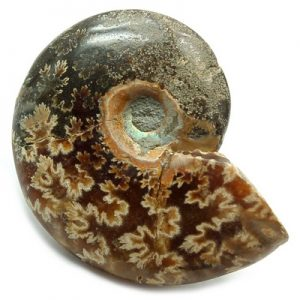 polished ammonite nfspam4